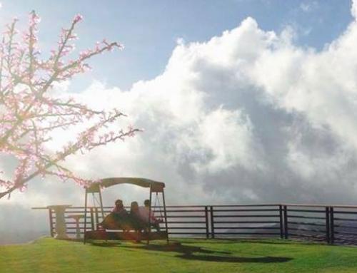 Pine Tree Mountain Resort, Cebu's Overlooking Nirvana