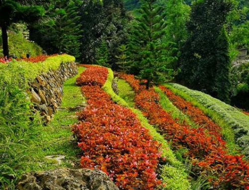 Terrazas De Flores Botanical Garden in Busay: Cebu's Rainbow Flowerbed in the Highlands